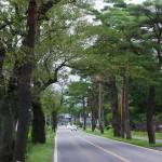 川崎町は「街道のまち」――笹谷街道(国道286号)の松並木は街道の風情を伝えます