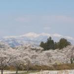 釜房湖畔一周ドライブで見つけた、桜と蔵王の修景