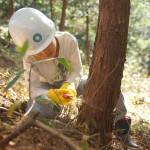 林業体験ができる「育樹祭」で枝打ち&間伐体験。
